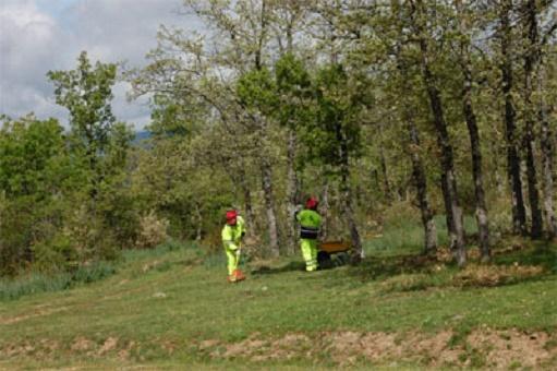 UGTCYL exigen mayor control de las condicones de seguridad laboral en el sector forestal